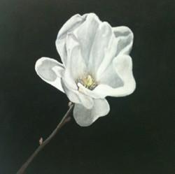 carlie-magnolia