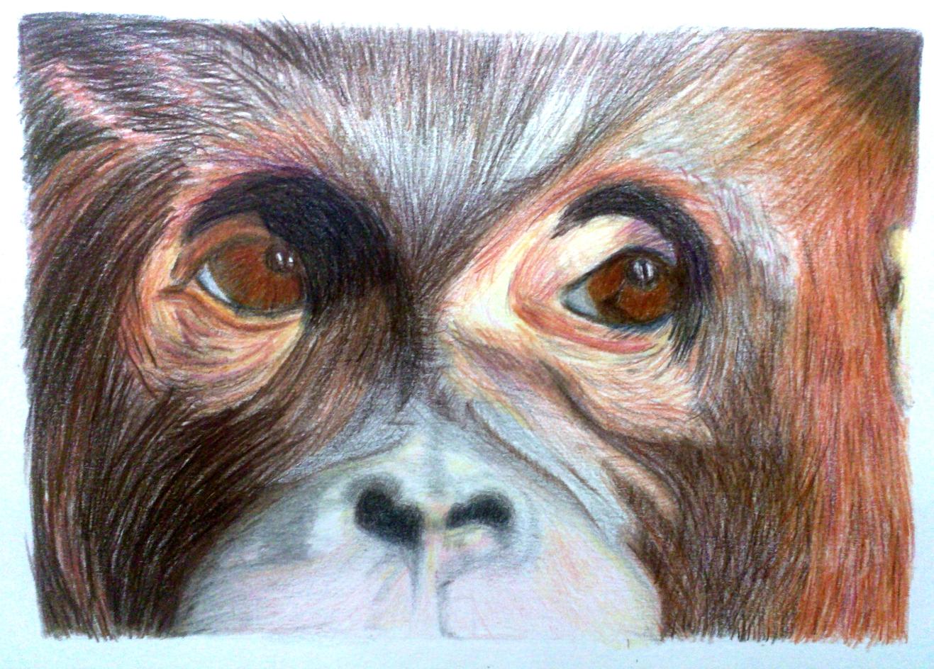 rhonda-monkey