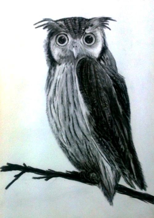 sueb-owl