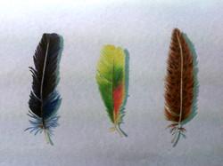 sonya-feathers