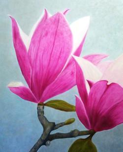 olgao-magnoliatwo