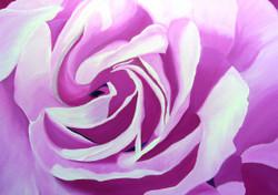 elaineb-pinkrose