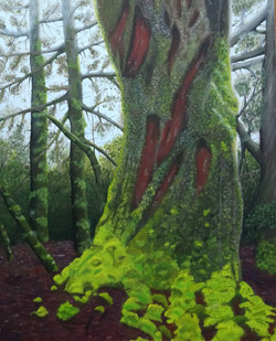 diane-broadley-tree-april2021