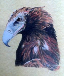 sonya-eagle2