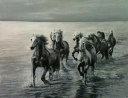 carlie-cash-horses-2015