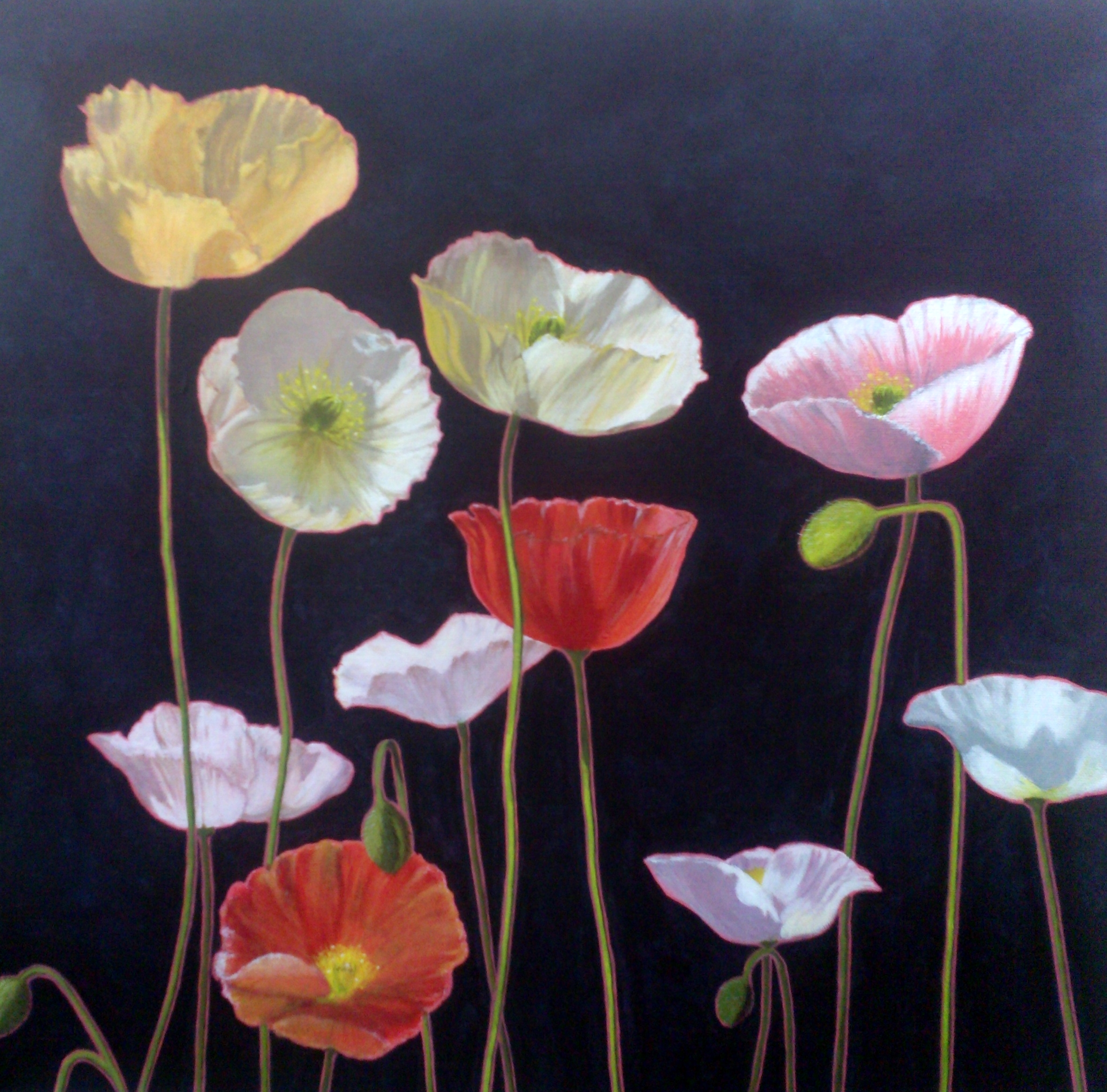 carlie-poppies