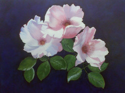 carlie-roses