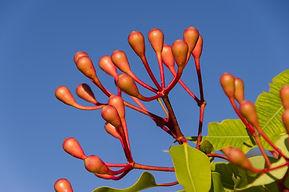 tree-branch-blossom-plant-sky-leaf-10487