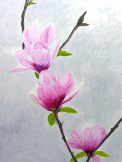 olgao-magnolia
