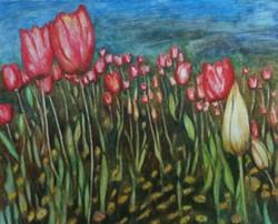 giovanna-tulips