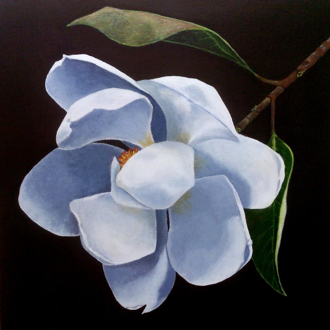 jene-magnolia