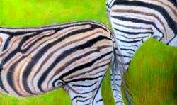 rhonda-zebra