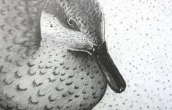 jill-duck