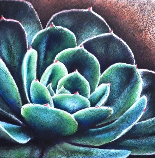 petaw-succulent