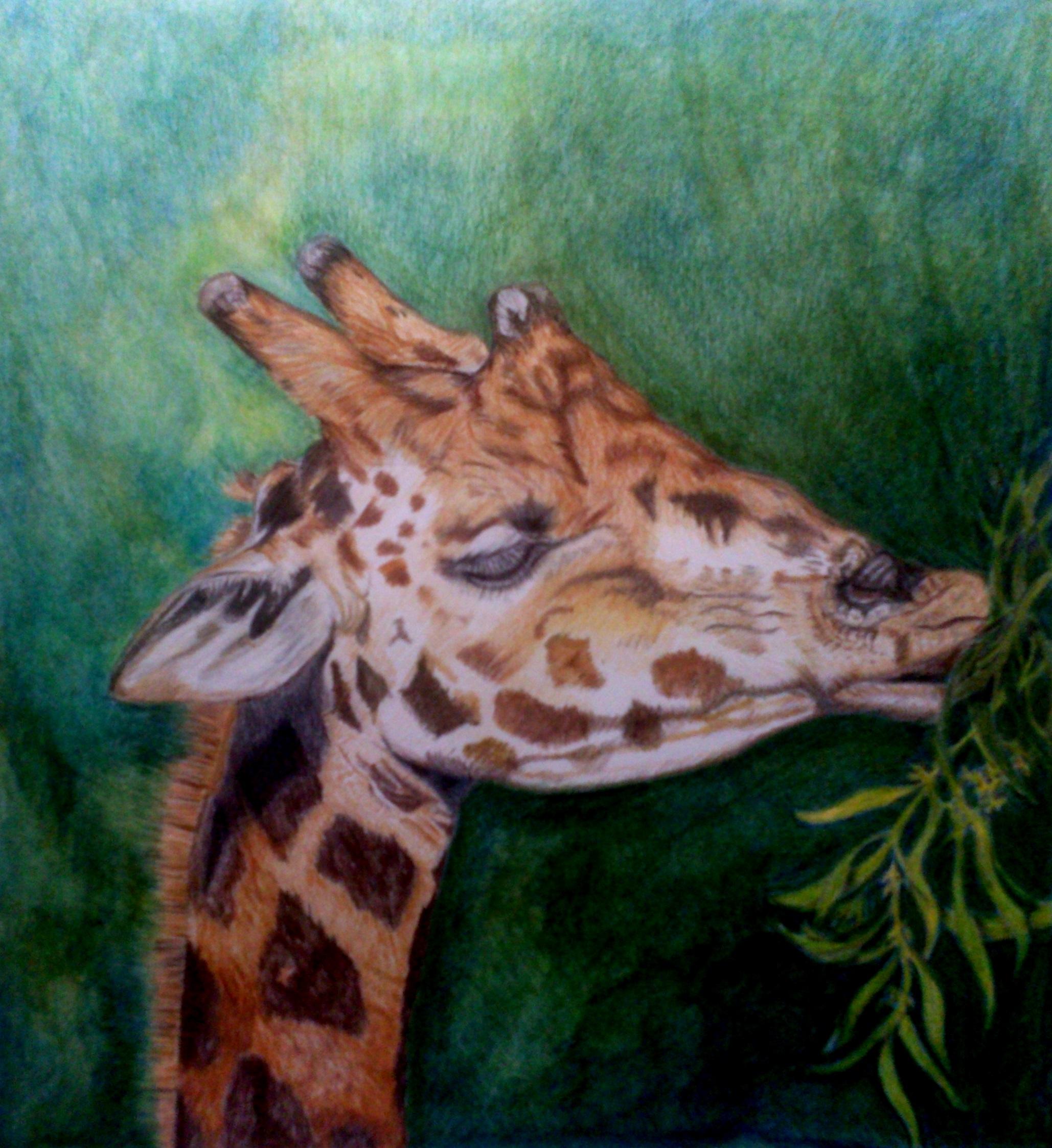 rhonda-giraffe