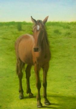 doug-horse