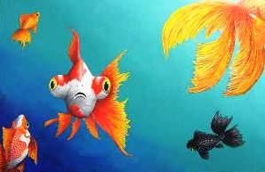 jillc-fish