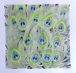 sonya-peacockfeathers