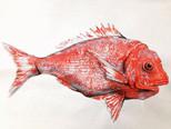 Fish print, acrylic wash and charcoal on