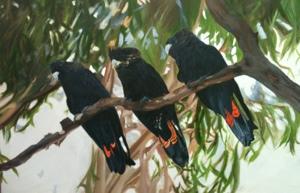 wends-cockatoos