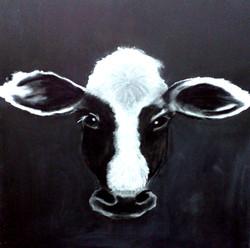 sueb-cow