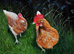 pat-culham-chickens