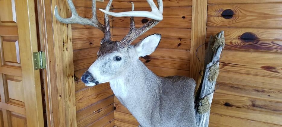 OPTO Deer Bust