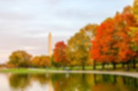 Autumn colors give way to the Washington