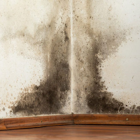 black-mold-symptoms-12-natural-remedies-