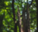 bark-branch-daylight-6044.jpg