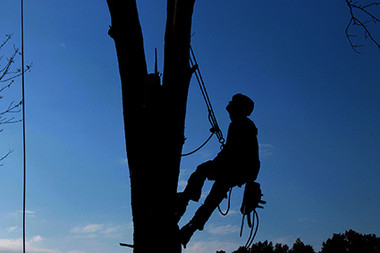 tree-service-1059484.jpg