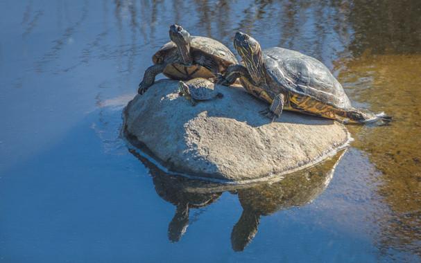 Angler's Cove - Turtles