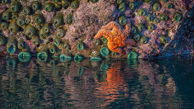 Bandon Beach - More Low Tide Creatures