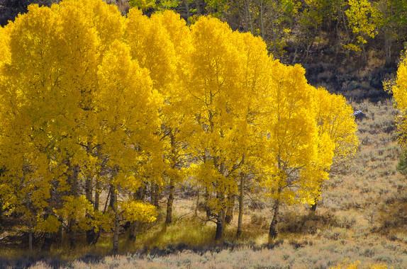 Tahoe Fall Foliage Field Trip