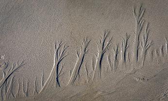 1908-Bandon Beach-Sand Patterns Kress-Au