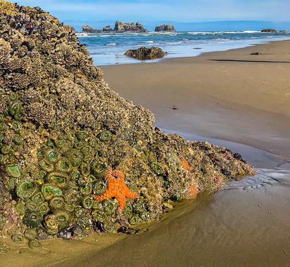 Bandon Beach - Low Tide