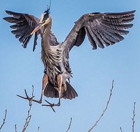 1902-Lincoln Egret Heron Rookery-Locatio