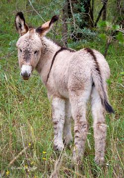 Donkey D-2