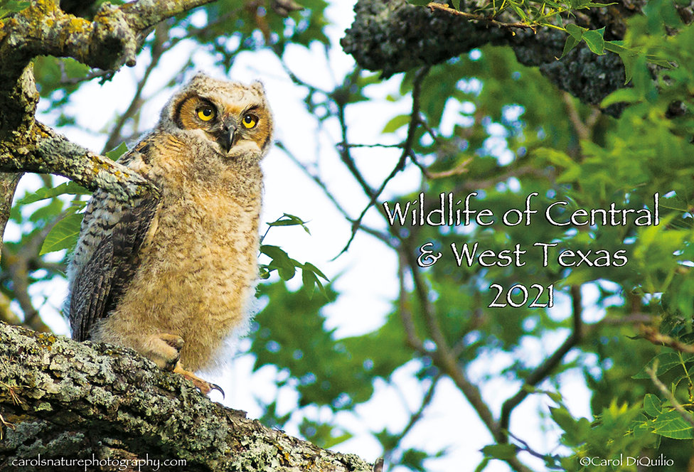 2021 Wildlife Calendar.jpg