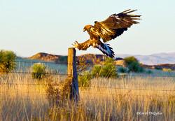 Golden Eagle G-19