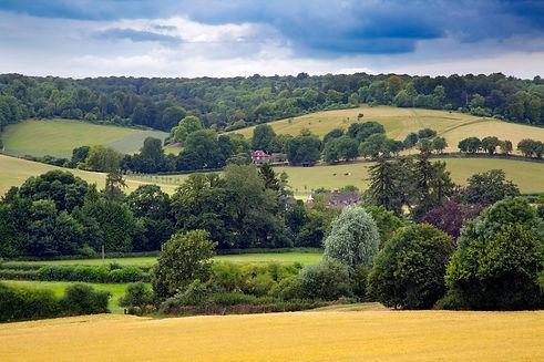 Hambledon Valley.jpg