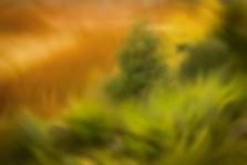 blurryTree.JPG