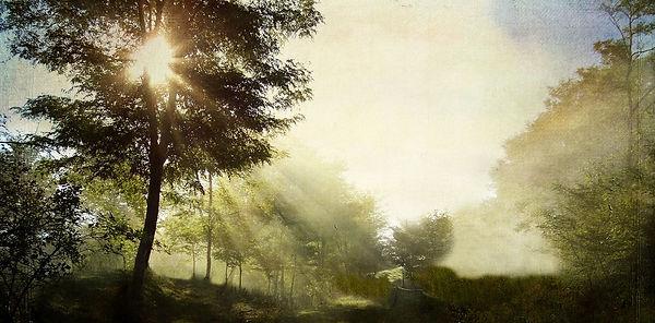 MorningSunInTrees.JPG