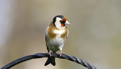 bird perched.JPG