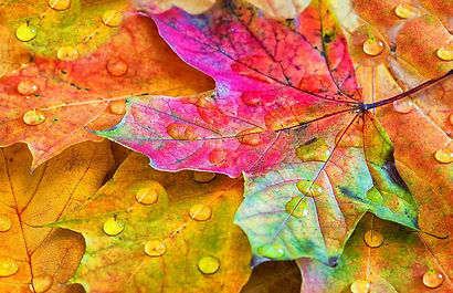 autumn-leaves-colorful.JPG