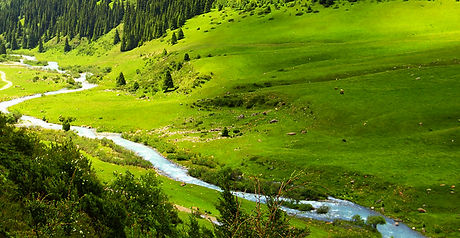 green-meadow-with-stream.jpg