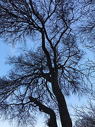 Twilight Tree=400w.jpg