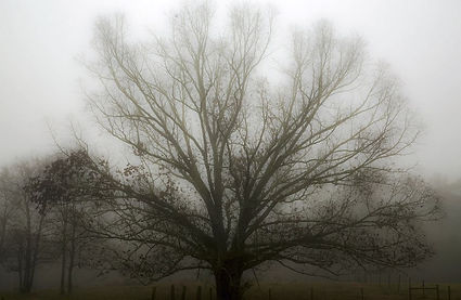 tree in fog.JPG