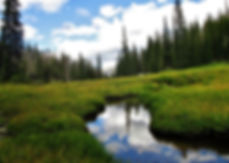 meadow-with-stream.JPG