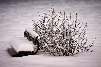 wintery snow.JPG